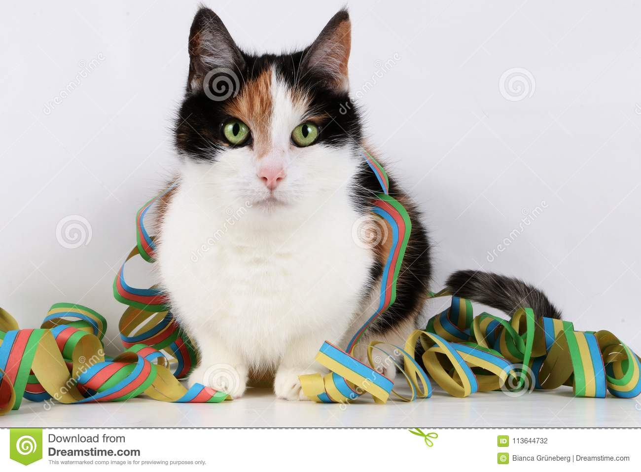 Beautiful Cat With Colorful Paper Streamer Stock Photo - Image of ...