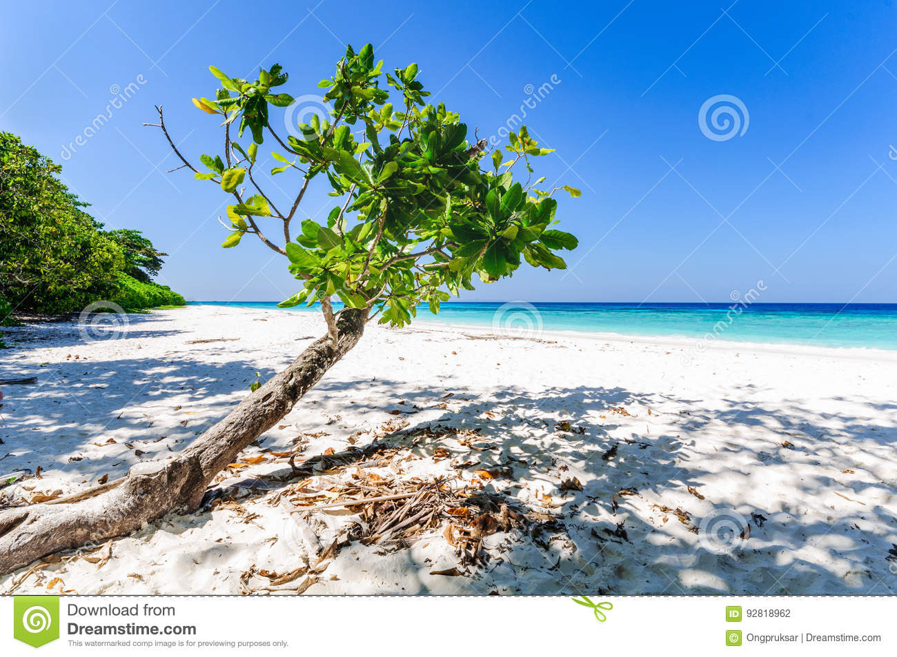Beautiful tropical beach, white sand and blue sky background.