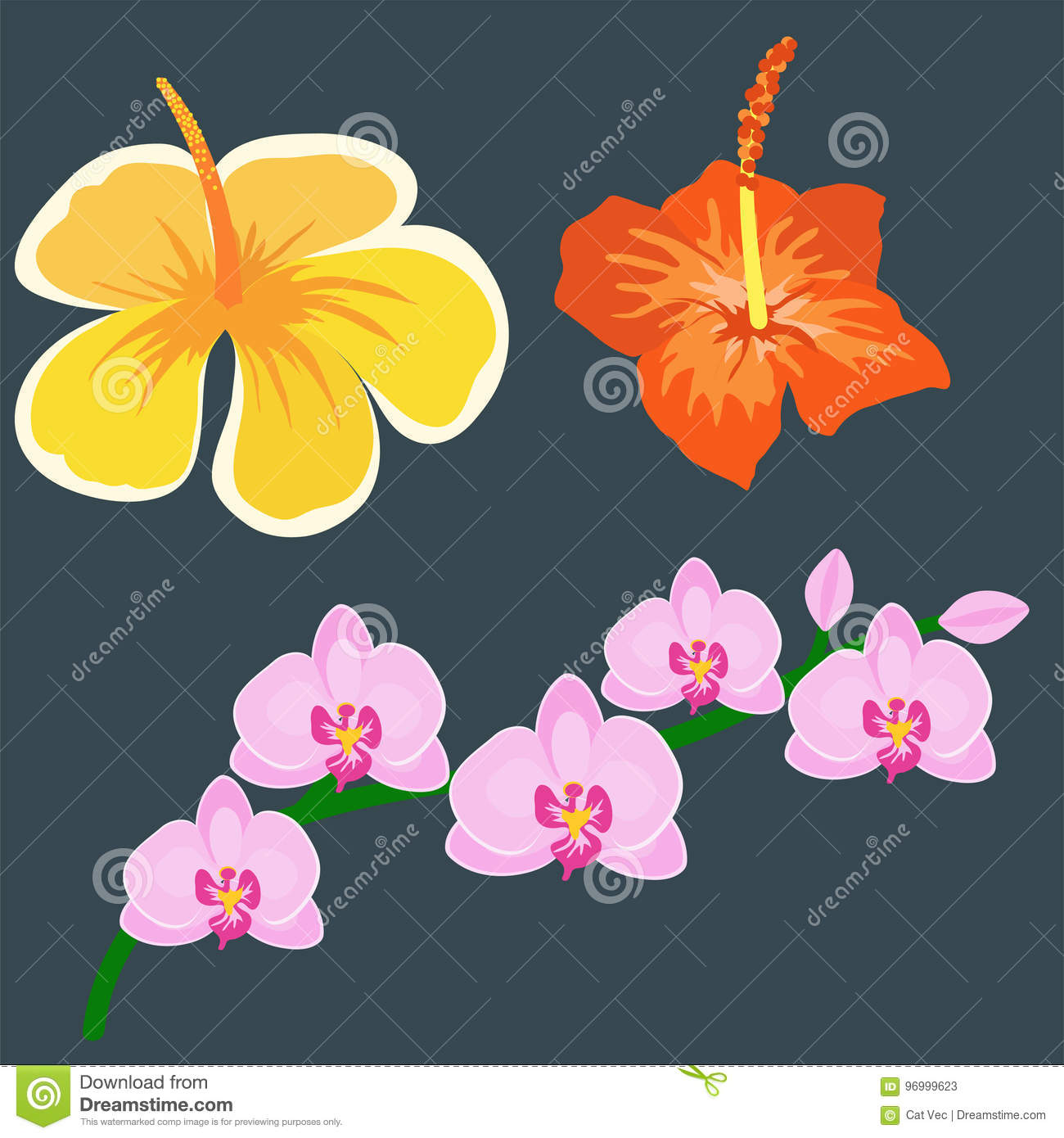 Beautiful Tropical Flower Set Design Summer Plants Colorful