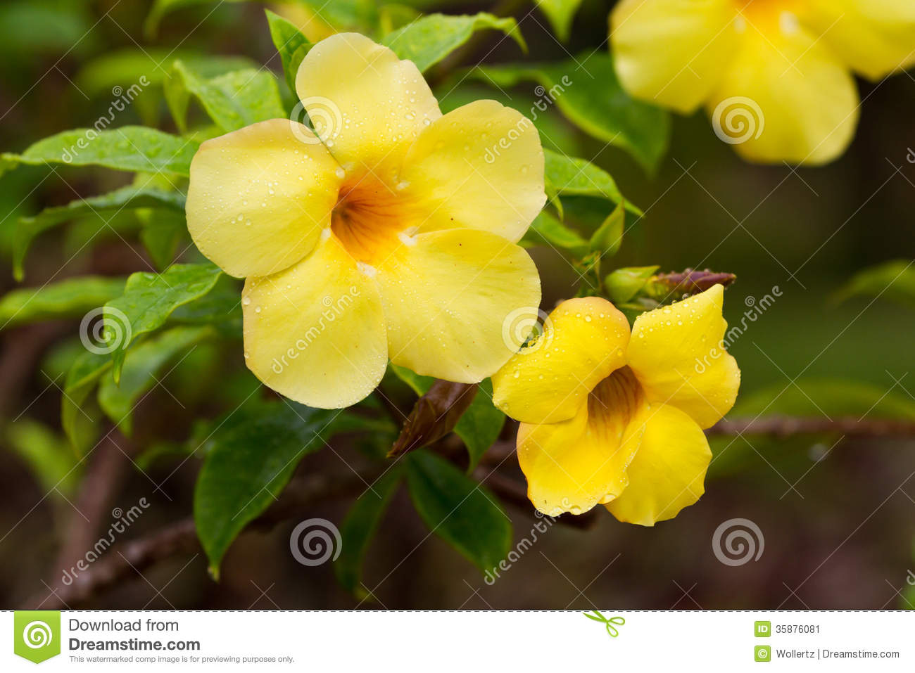 Yellow Tropical Flowers Savingourboysfo