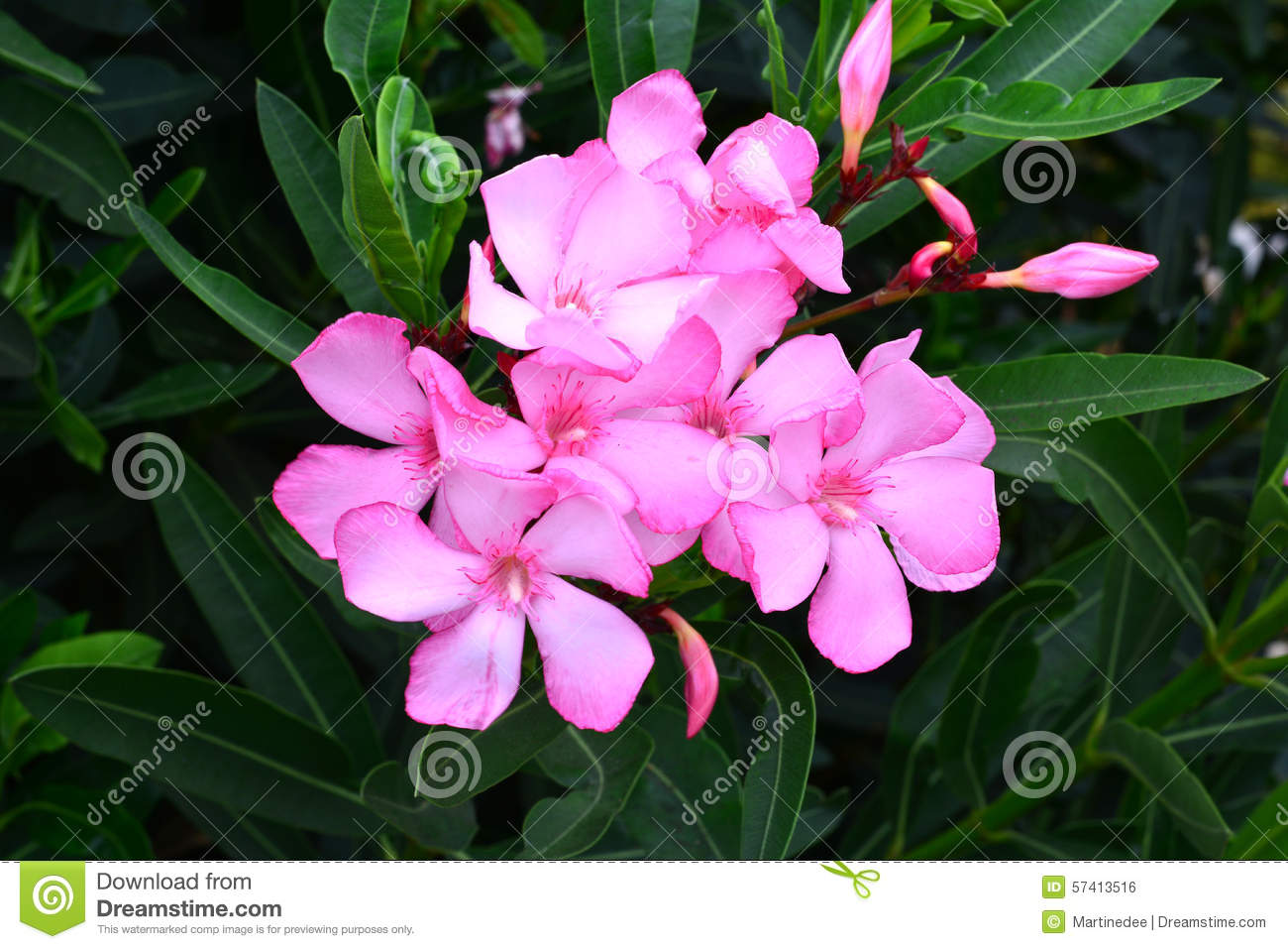 Beautiful Tropical Flowers On A Green Background Close Upnary