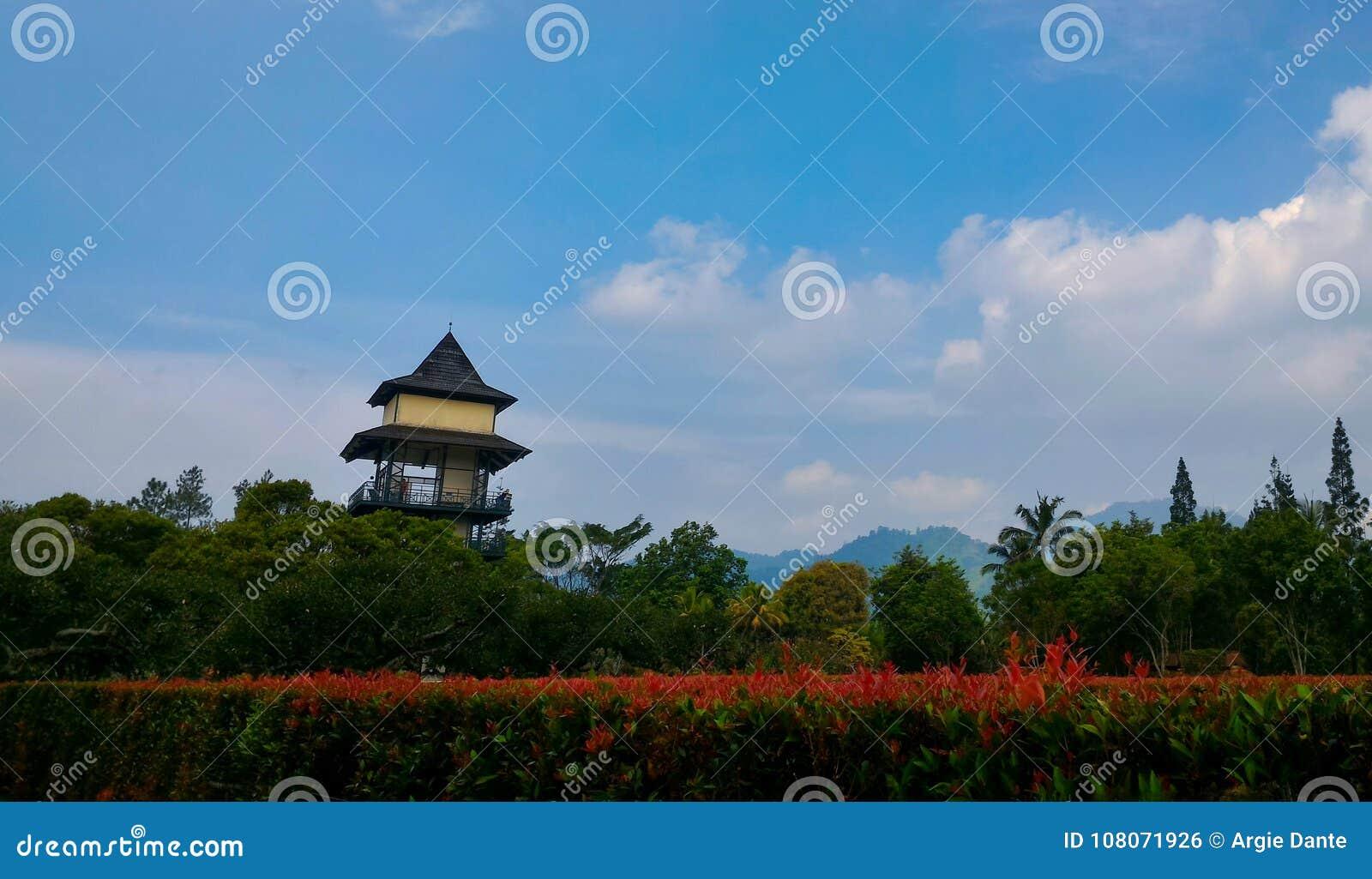 Beautiful tropical garden stock photo. Image of tropical - 108071926