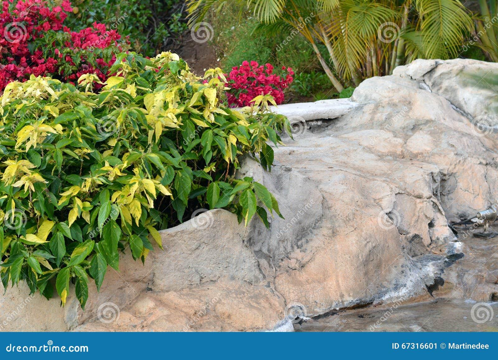 Beautiful tropical garden tenerife canary island spain for Botanische tuin tenerife