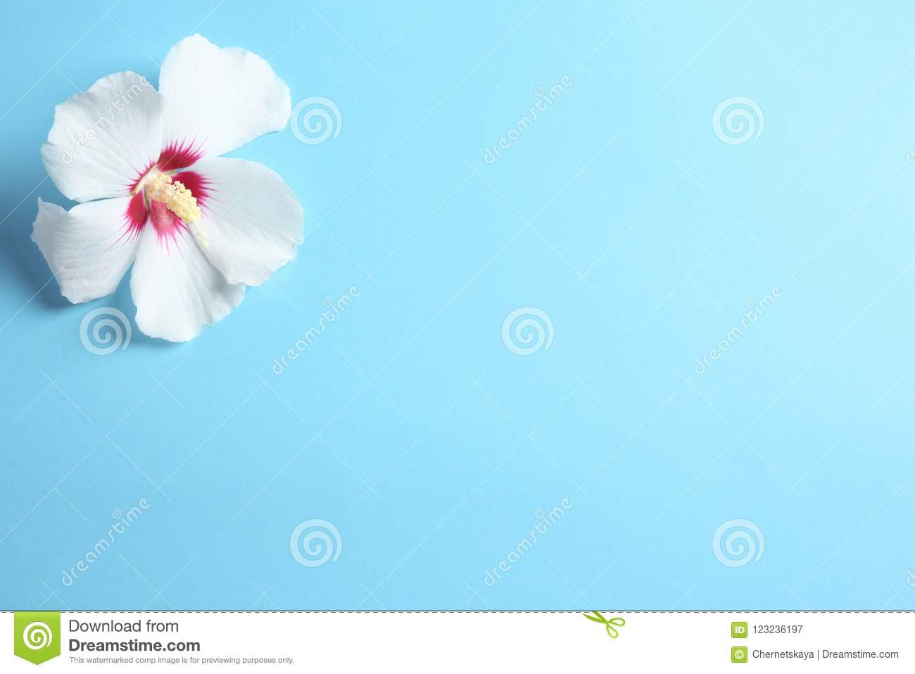 Beautiful Tropical Hibiscus Flower Stock Image Image Of Bloom