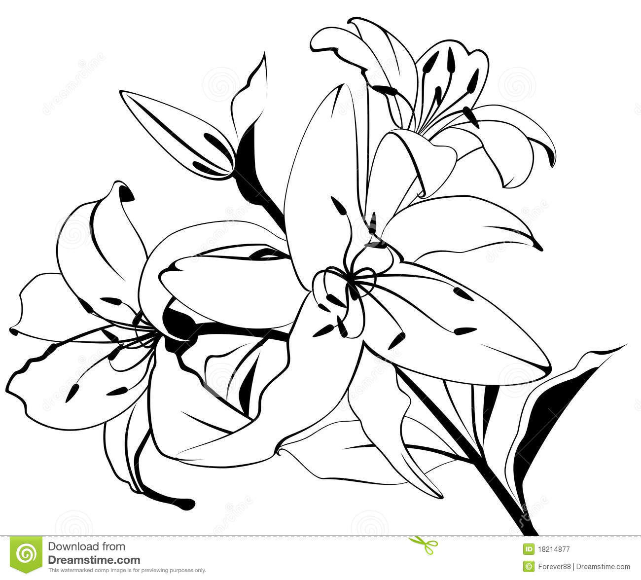 beautiful tropical lillies royalty free stock photography  image, Natural flower