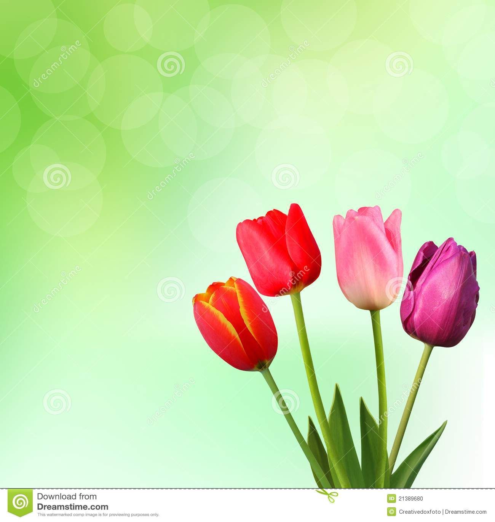 Beautiful Tulips On Green Background Stock Photo Image