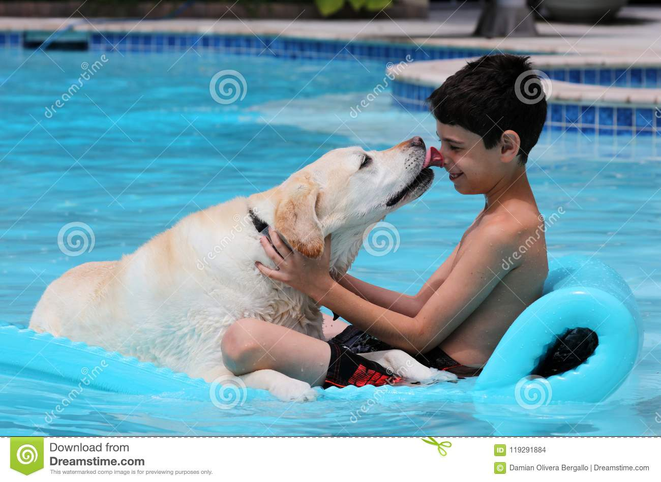 beautiful unique golden retriever labrador dog boy relaxing pool floating bed super funny children glasses