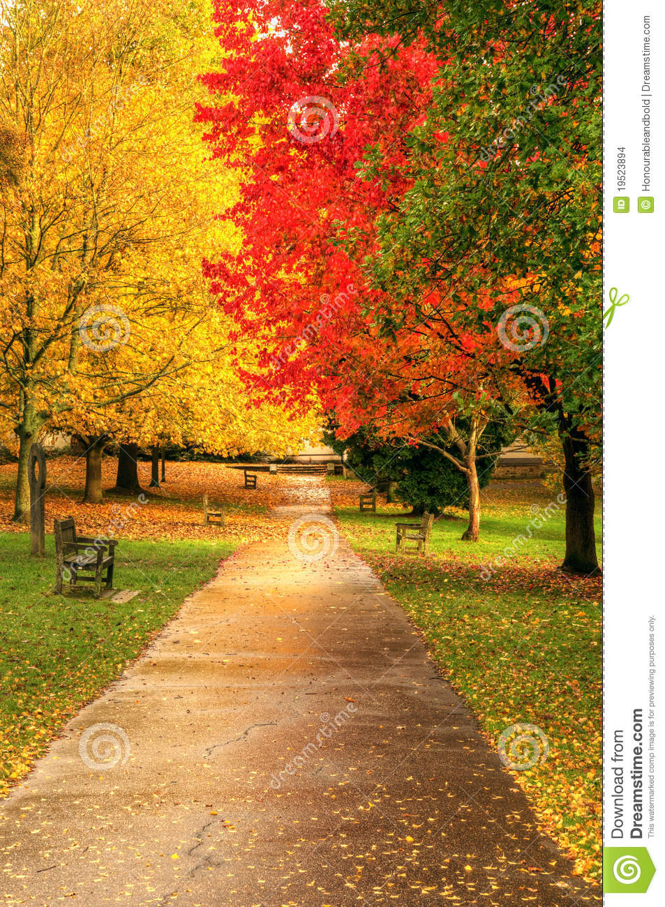 Beautiful Vibrant Autumn Fall Forest Scene Stock Images