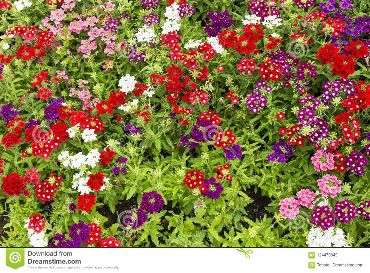 Natural Red Purple And White Flowers Background Stock Image Image