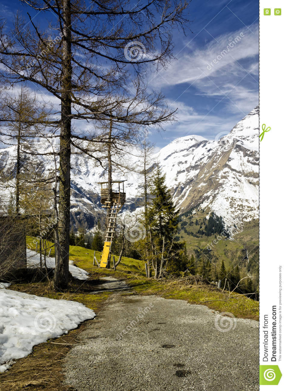 Beautiful View Of Alps Mountains And Pine Tree Forest ...