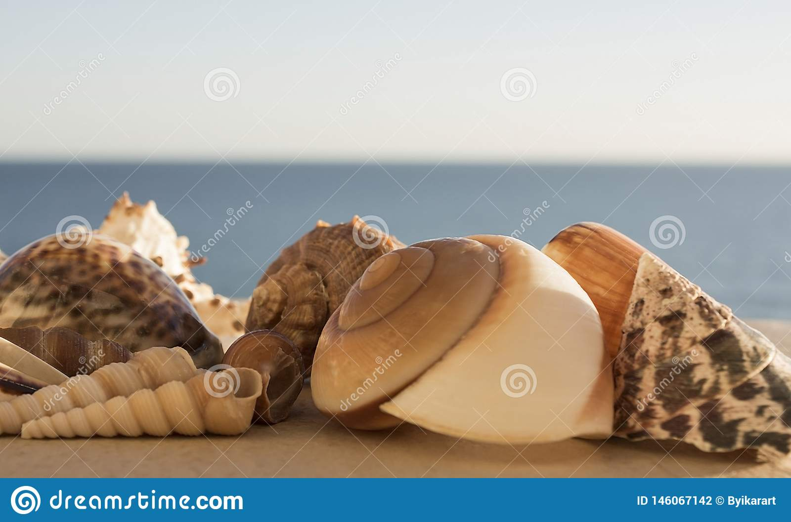 Beautiful view different sized multicolored seashells on a background of blue sea