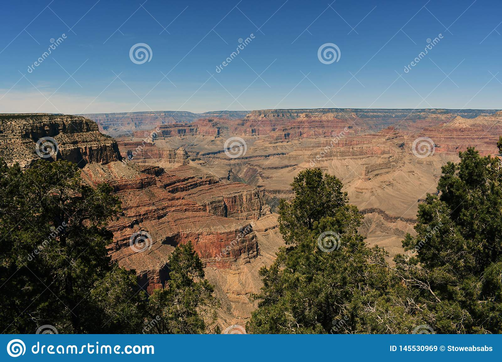 Beautiful view of grand canyon and trees