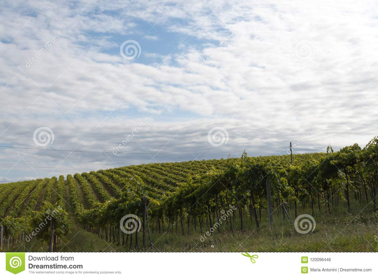 Agriculture, View Of The Fields And Farms In Italy Stock Photo