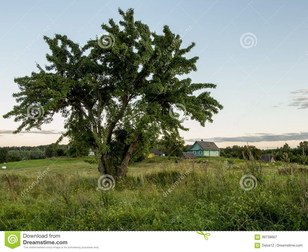 Summer landscape. Tree and green meadow. Nature