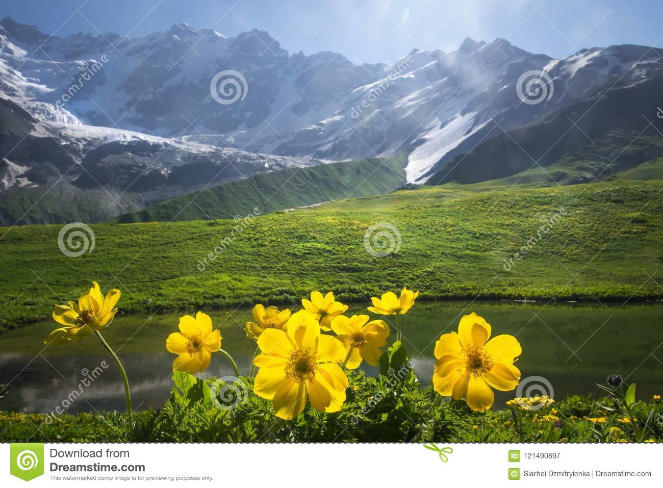 Beautiful view on green meadow with yellow flowers on foreground next to mountain on sunny clear summer day in Svaneti, Georgia