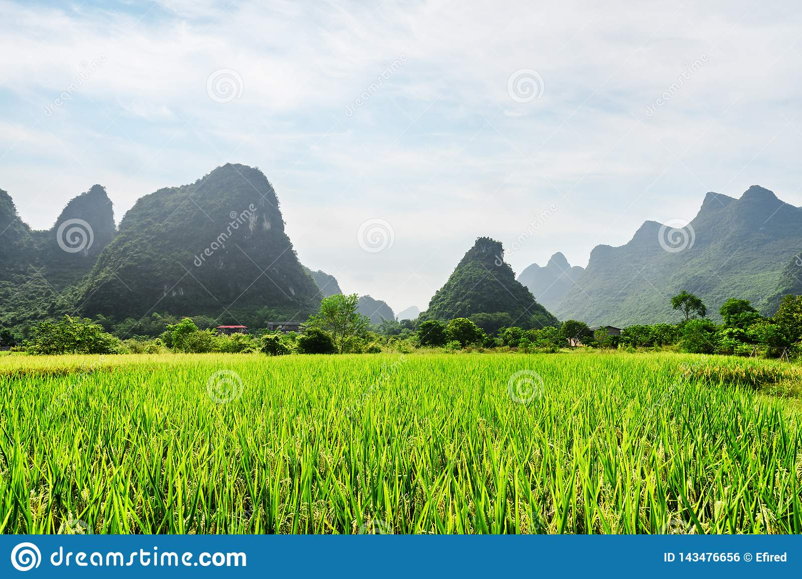 Beautiful view of green rice field and scenic karst mountains