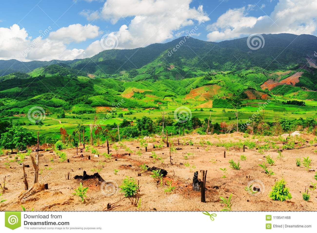 Scenic view of beautiful mountains and bright green rice fields