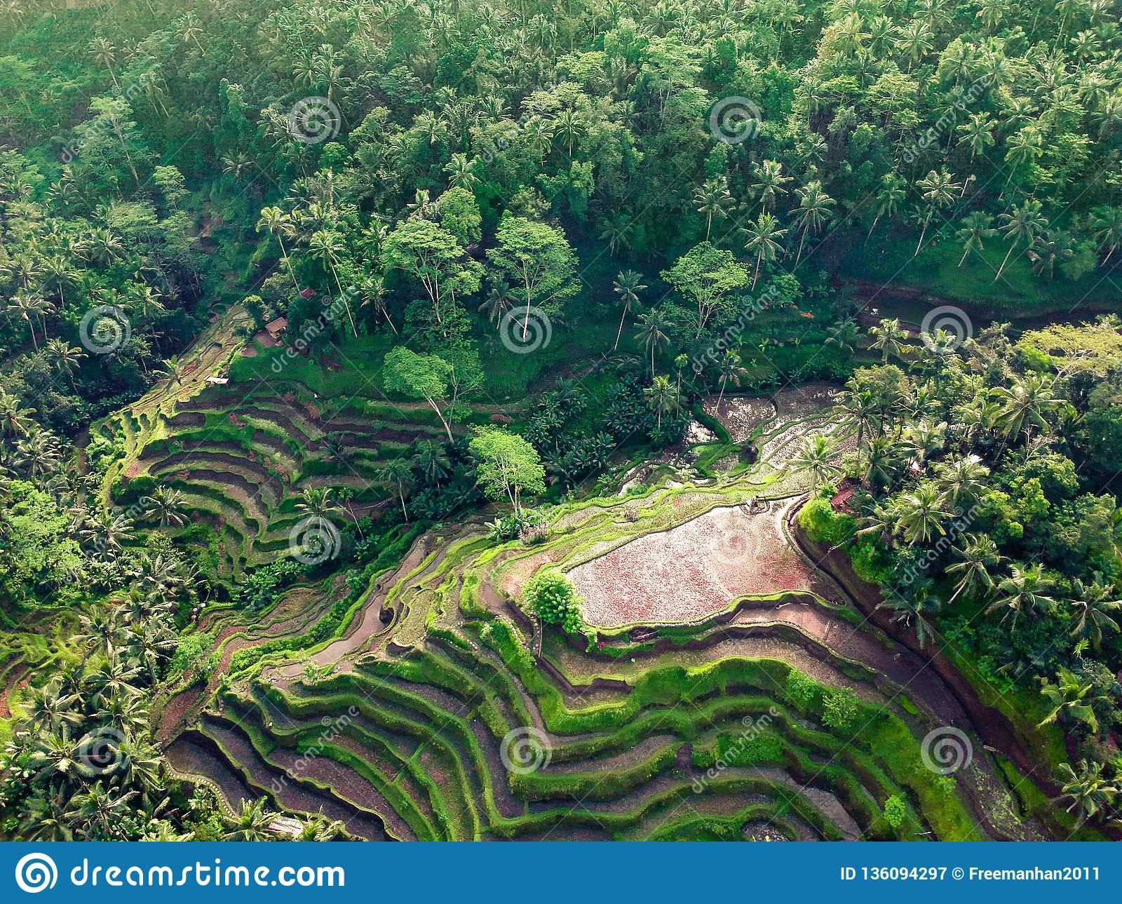 Beautiful views of rice terraces on the background of the jungle