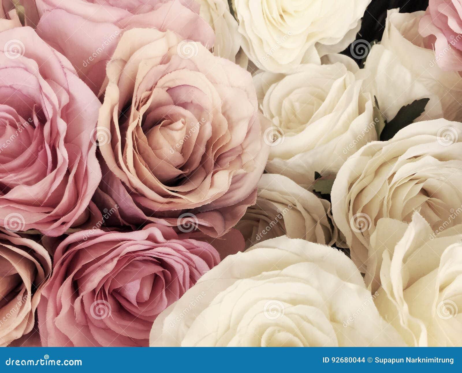 Beautiful Vintage Rose Background White Pink Purple Violet