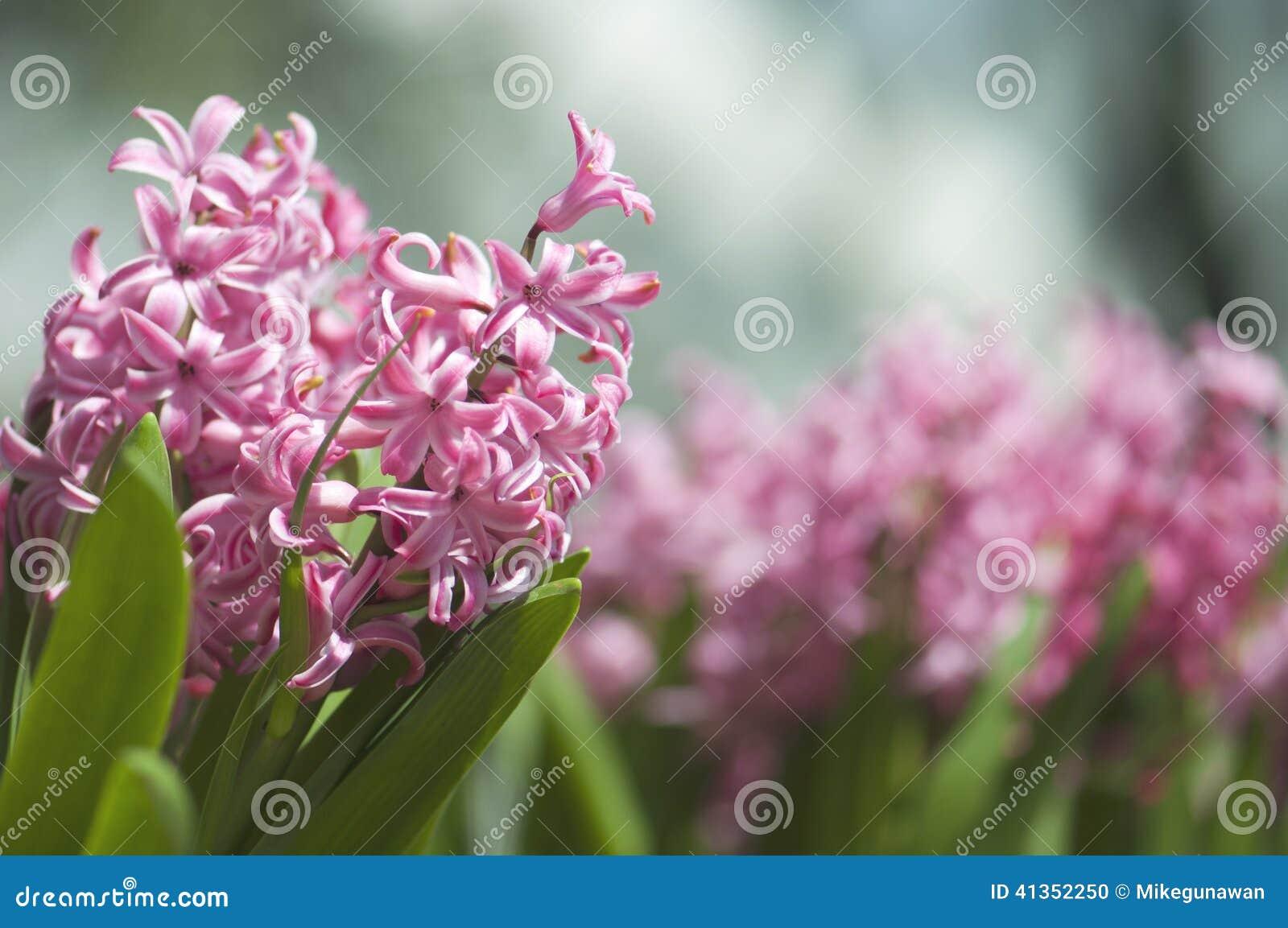 Beautiful violet pink little flowers in the garden stock photo download beautiful violet pink little flowers in the garden stock photo image of marina mightylinksfo
