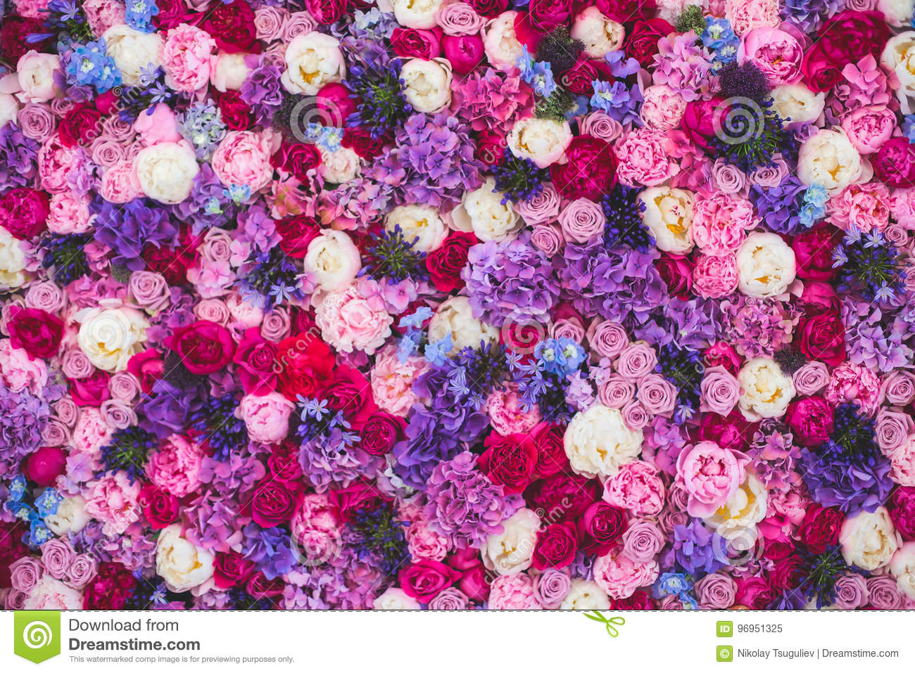 Beautiful wall made of red violet purple flowers, roses, tulips, press-wall, background
