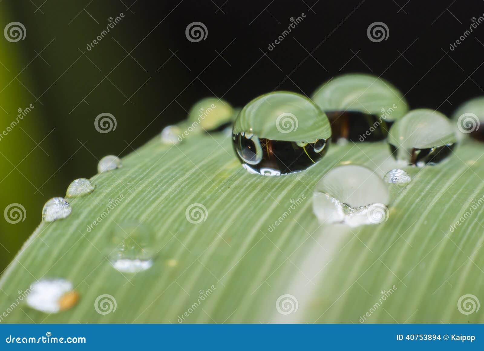 Beautiful water drop on green leaf macro .