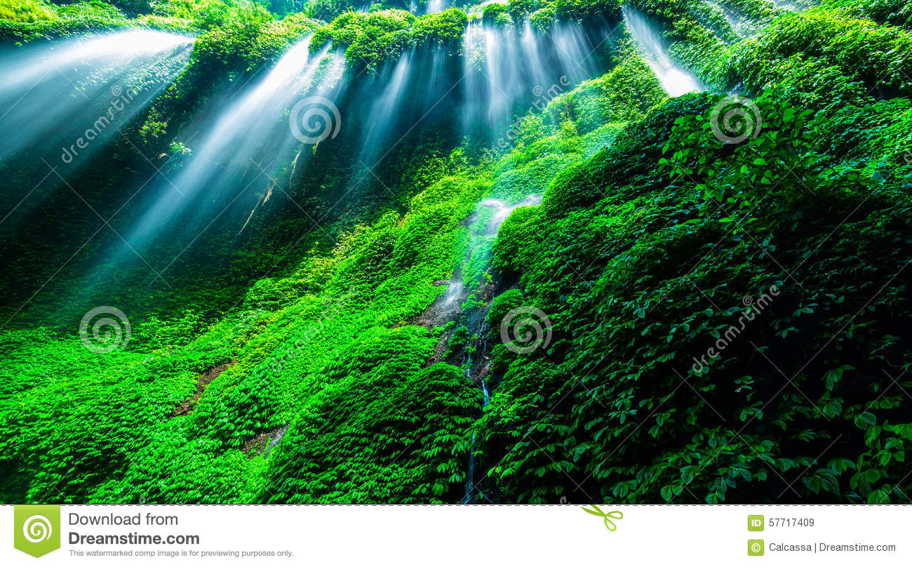 Beautiful waterfall in the green forest