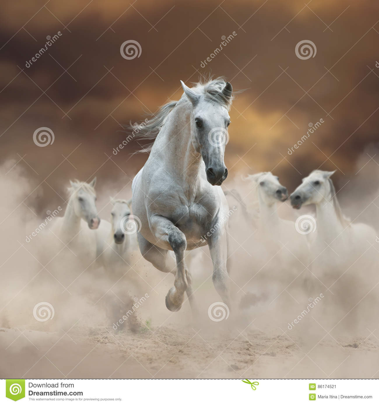 Beautiful white andalusian stallion with herd on freedom