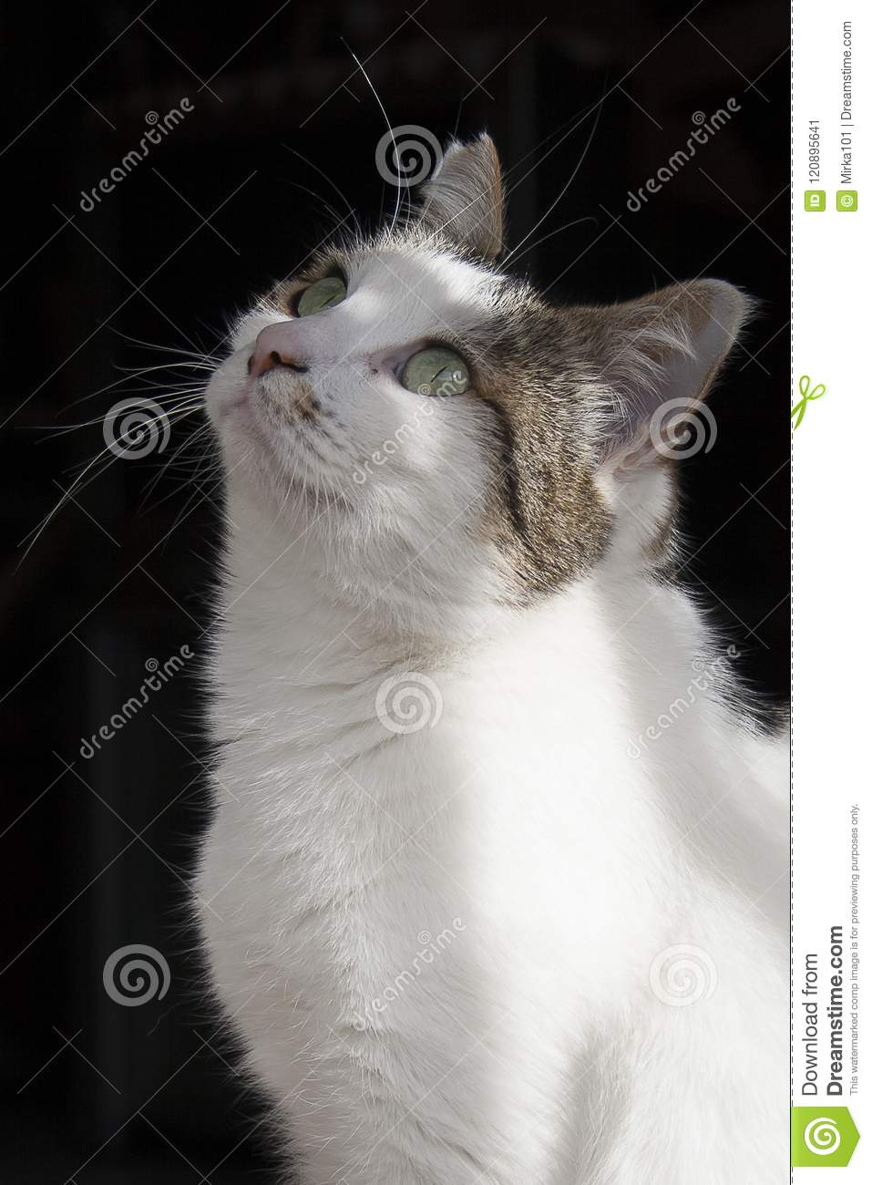 Cute White Cat, Wallpaper On A Dark Background Stock Image - Image ...