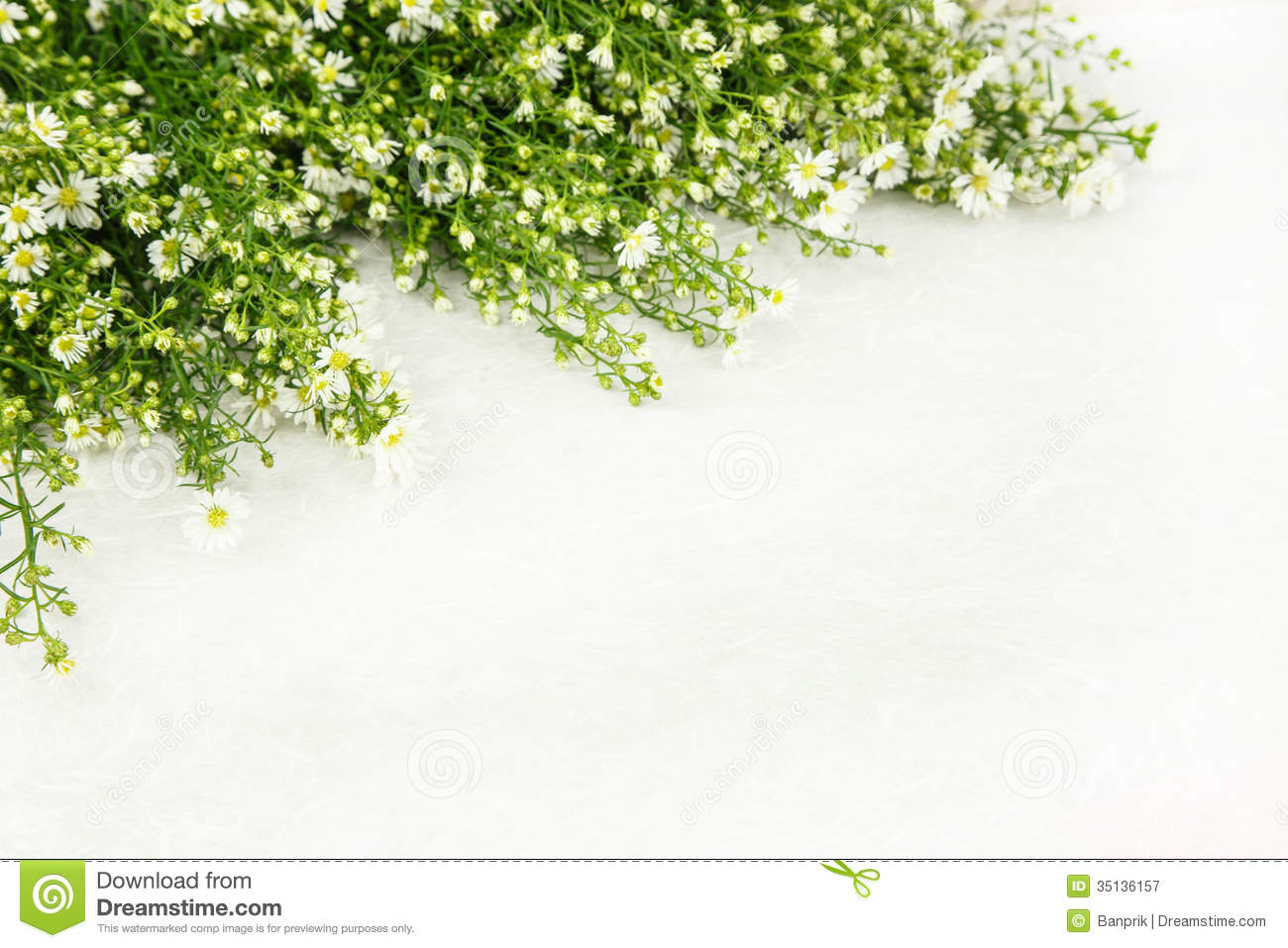 Beautiful White Flower As Frame Stock Image Image Of Bloom Space