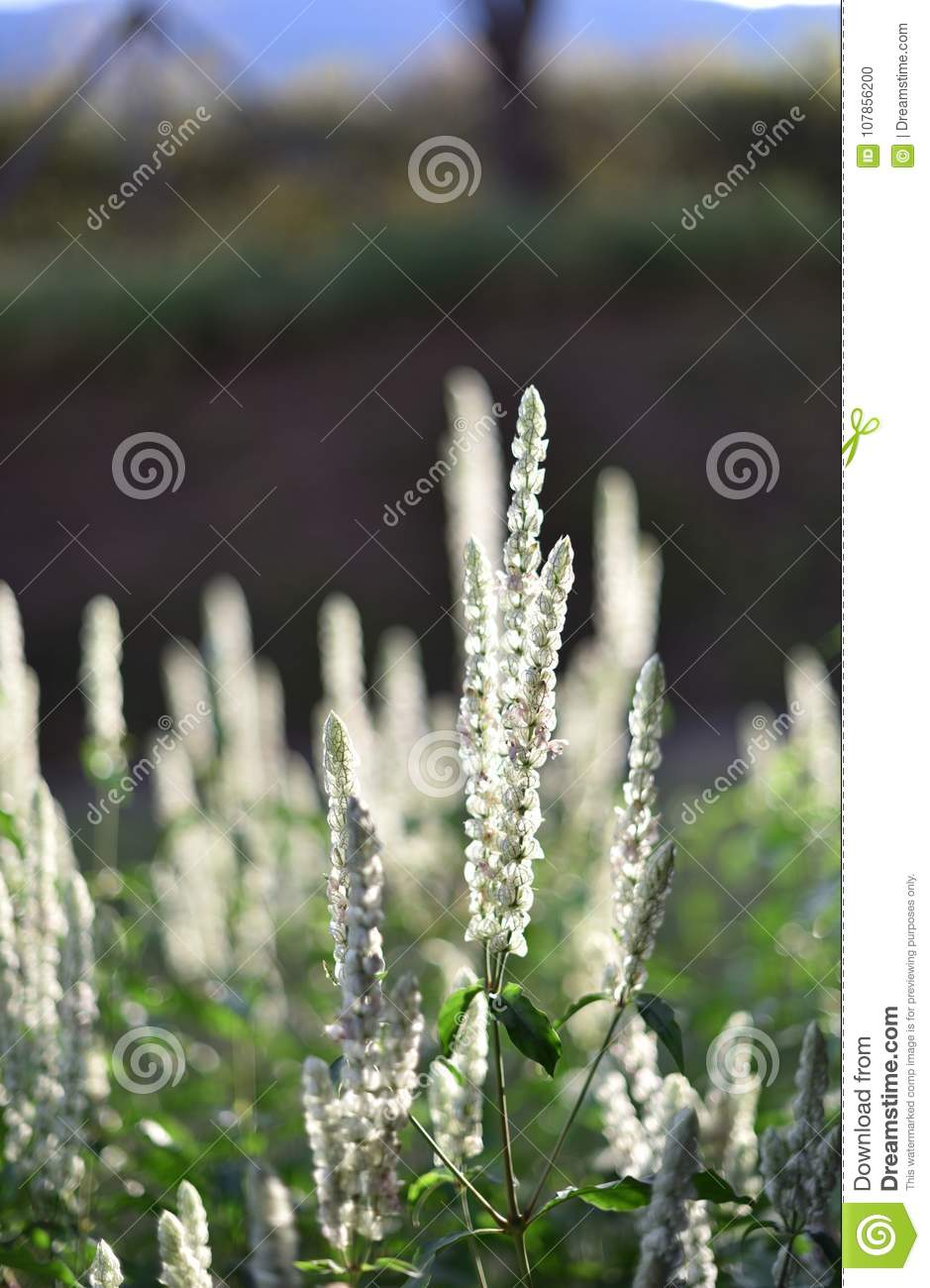 A Beautiful White Flower With Green Plants Background Stock Photo