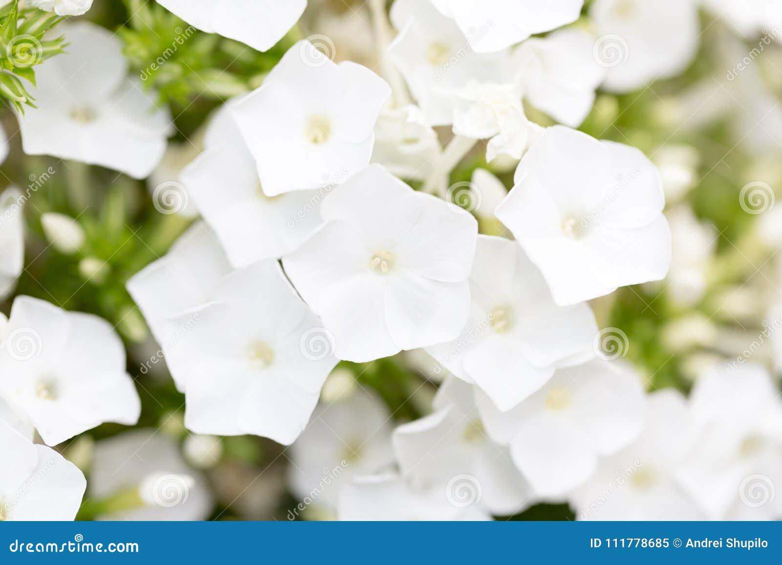Beautiful white flower in nature