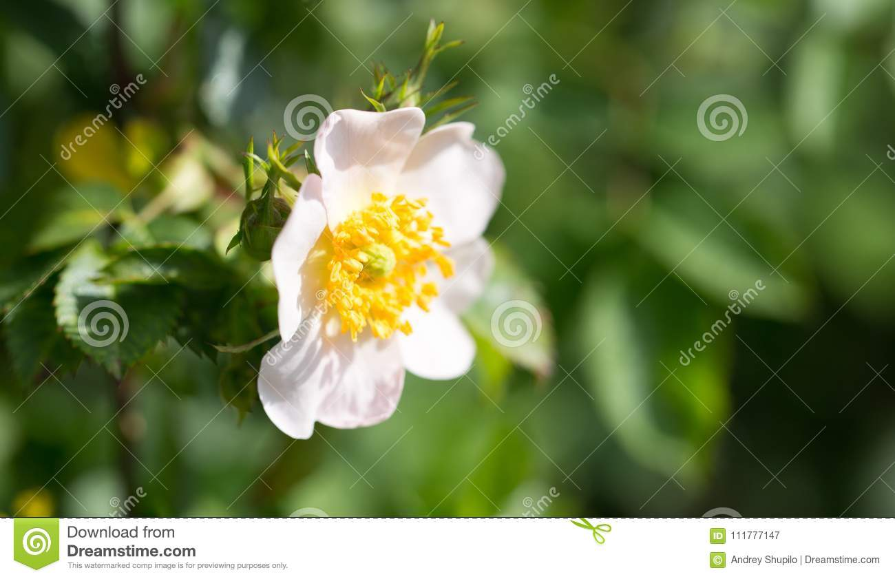 Beautiful white flower on the tree in nature