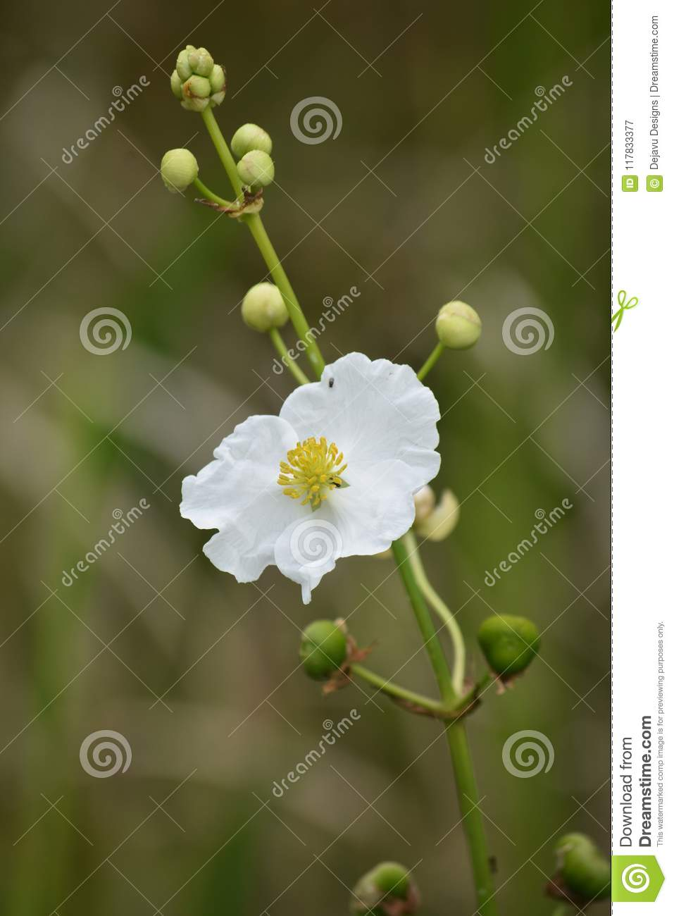Beautiful White Flower Up Close In Louisiana Stock Image Image Of
