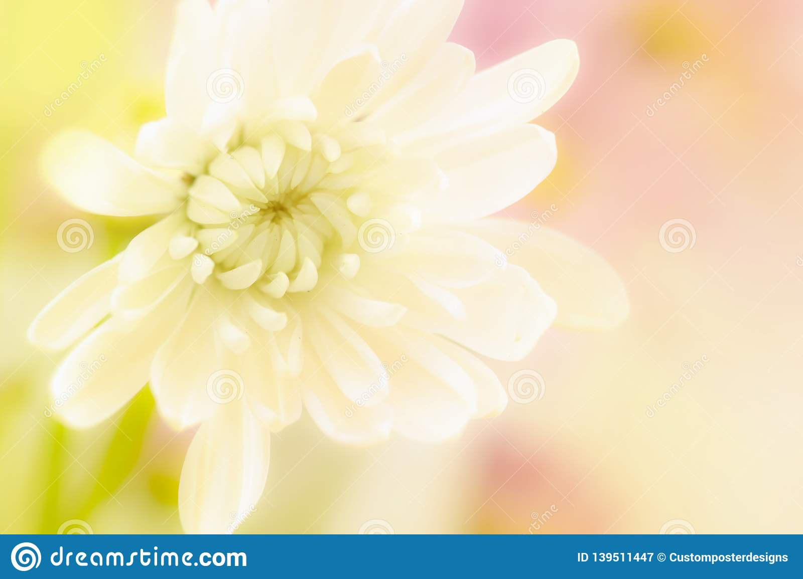 A beautiful white flower on a yellow and pink blurred background
