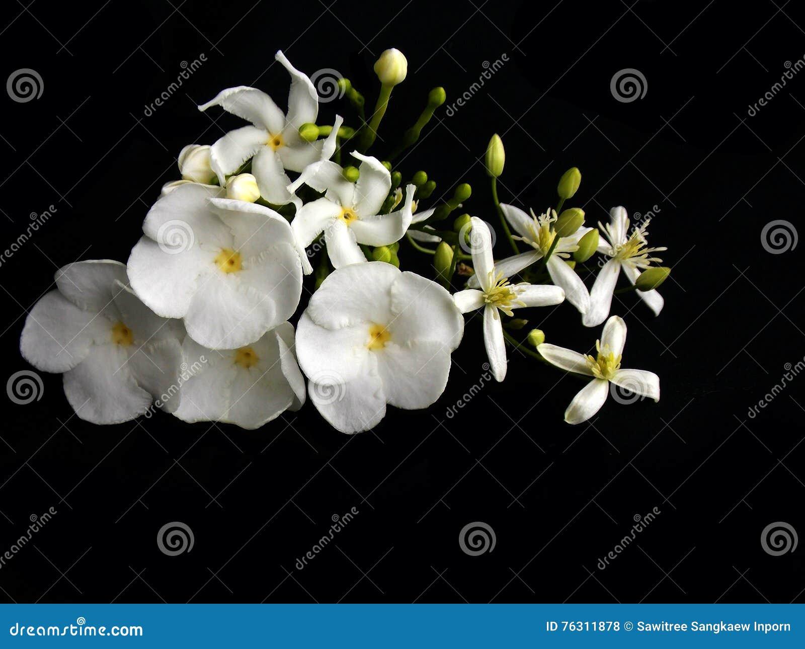 Beautiful White Gardenia Flower Stock Photo Image Of Gardenia