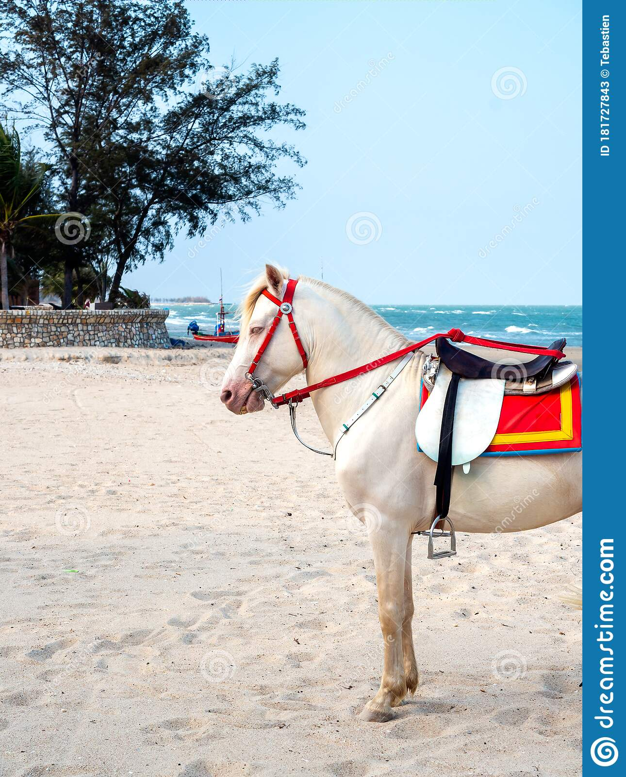 Beautiful White Horse On The Beach In Hua Hin Thailand Stock Image Image Of Obedient Huahin 181727843