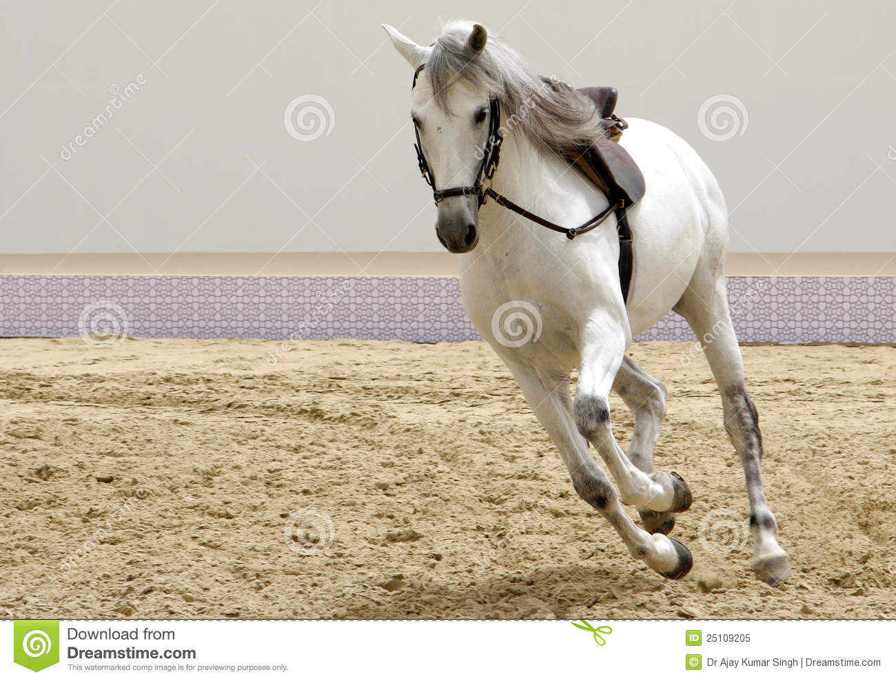 A Beautiful White Horse Galloping On Sand Stock Image ...