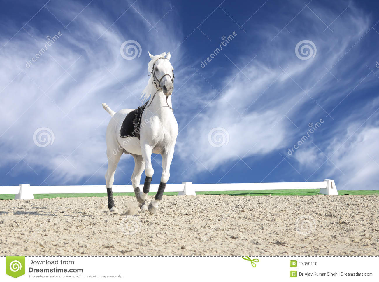 352 Beautiful White Horse Sand Arena Photos Free Royalty Free Stock Photos From Dreamstime