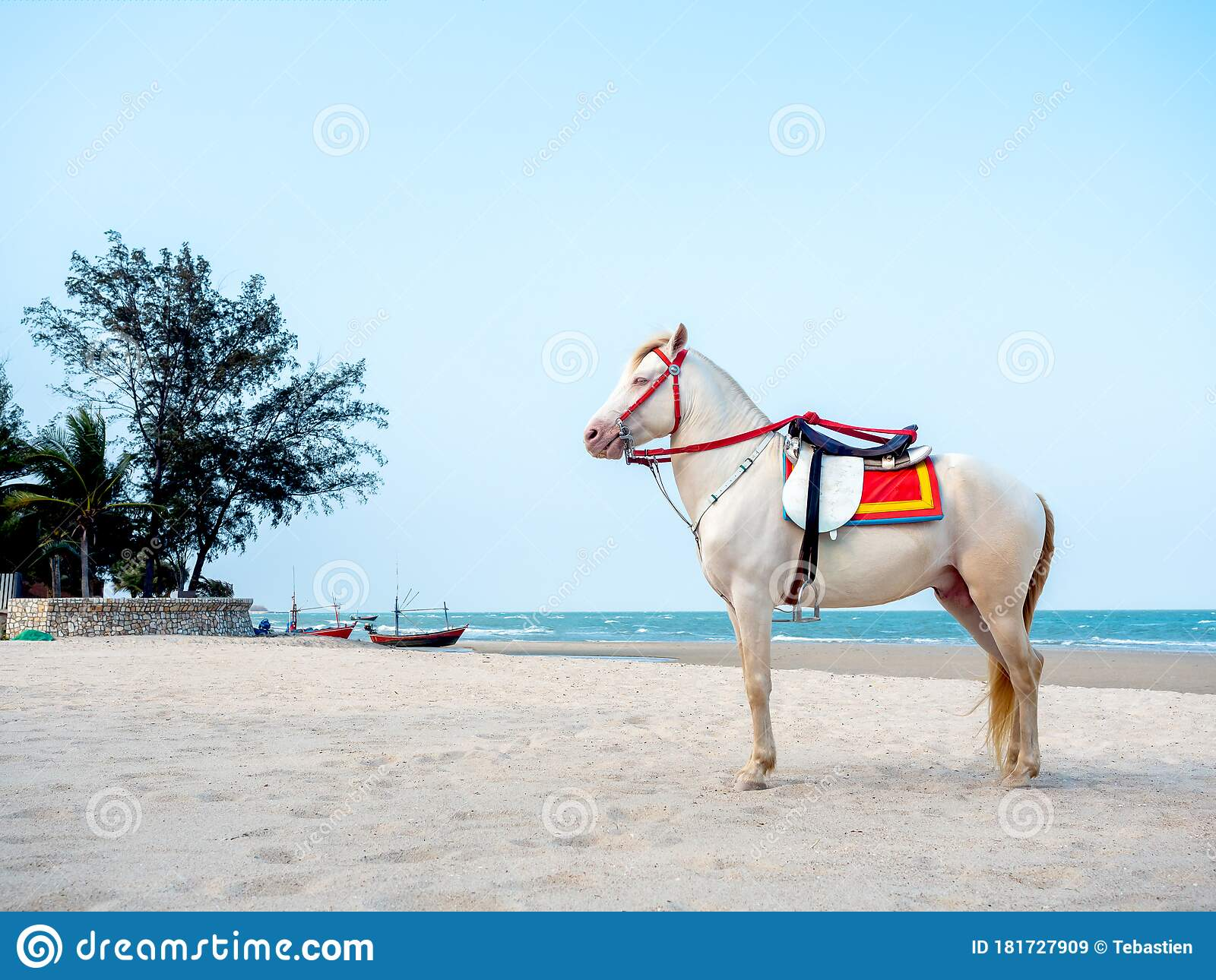 Beautiful White Horse On The Beach In Hua Hin Thailand Stock Image Image Of Outdoor Coast 181727909