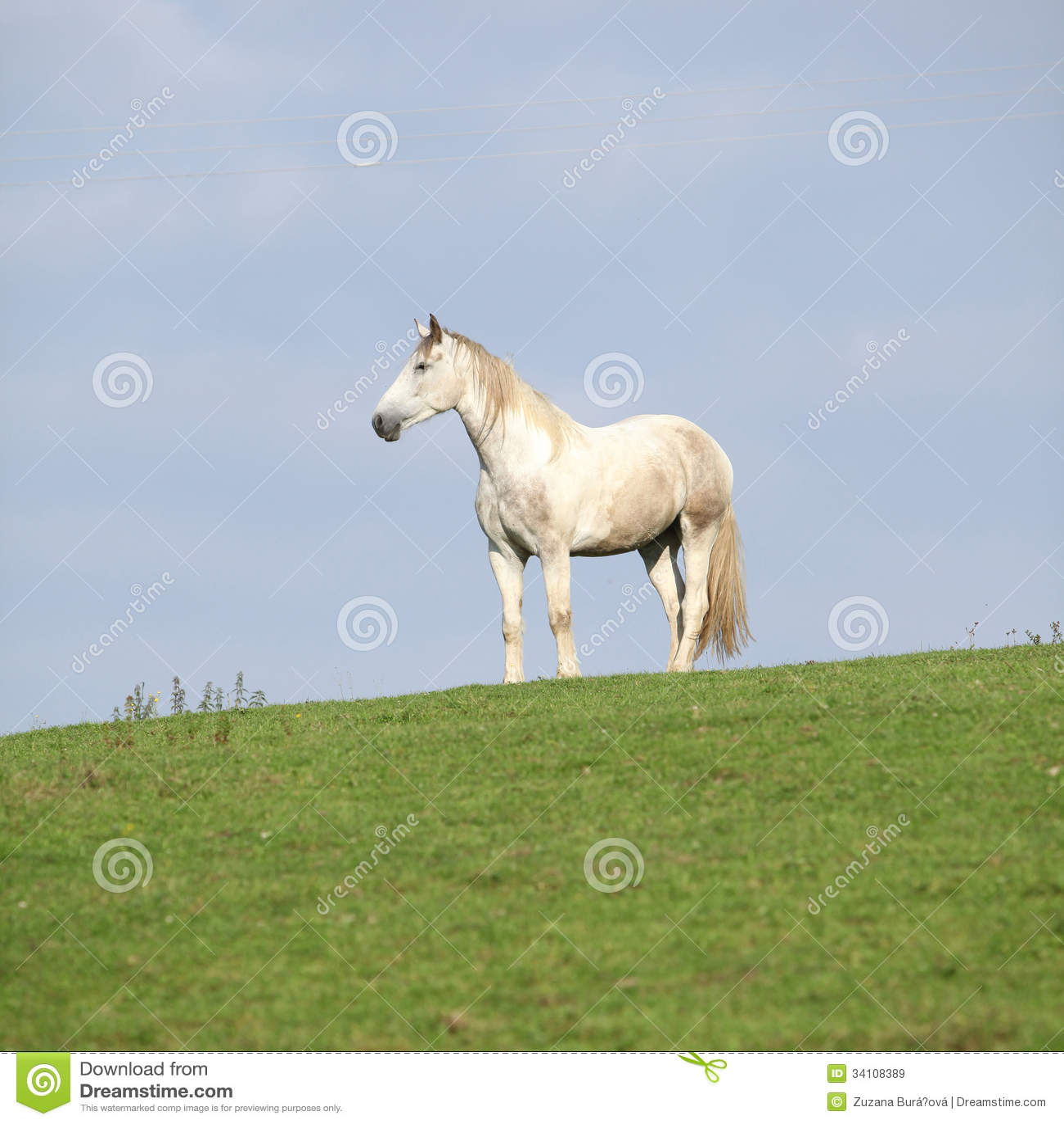 Beautiful White Horse Standing On Horizon Royalty Free ...