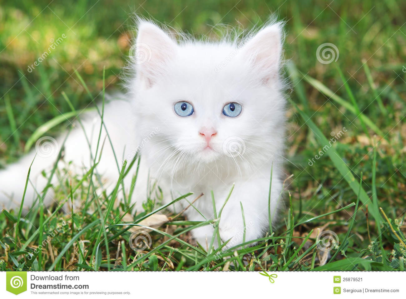 0f3576625d Beautiful White Kitten In The Park. Stock Image - Image of green ...