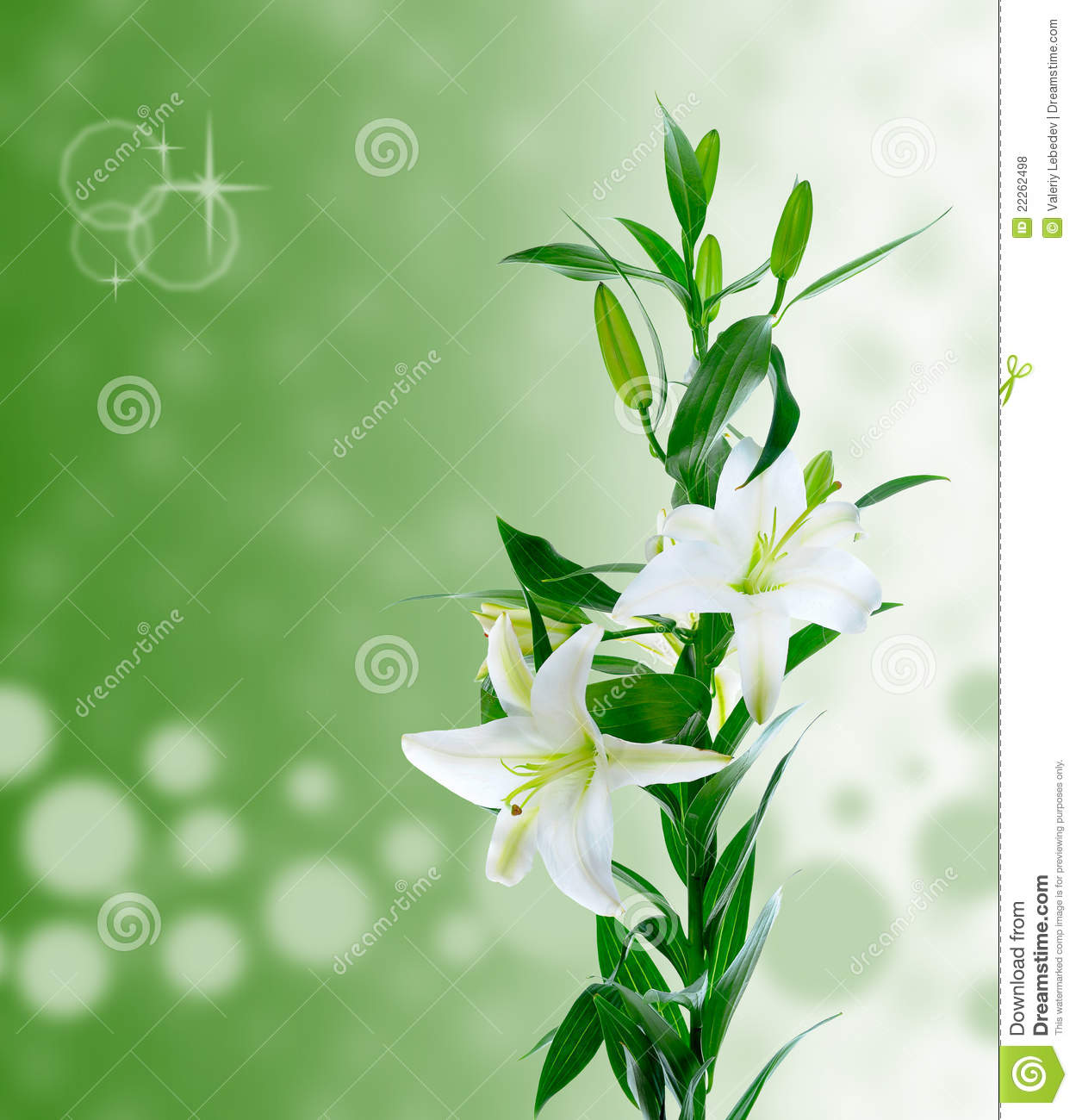 Beautiful White Lily Flowers Stock Photo Image Of Gift Colour