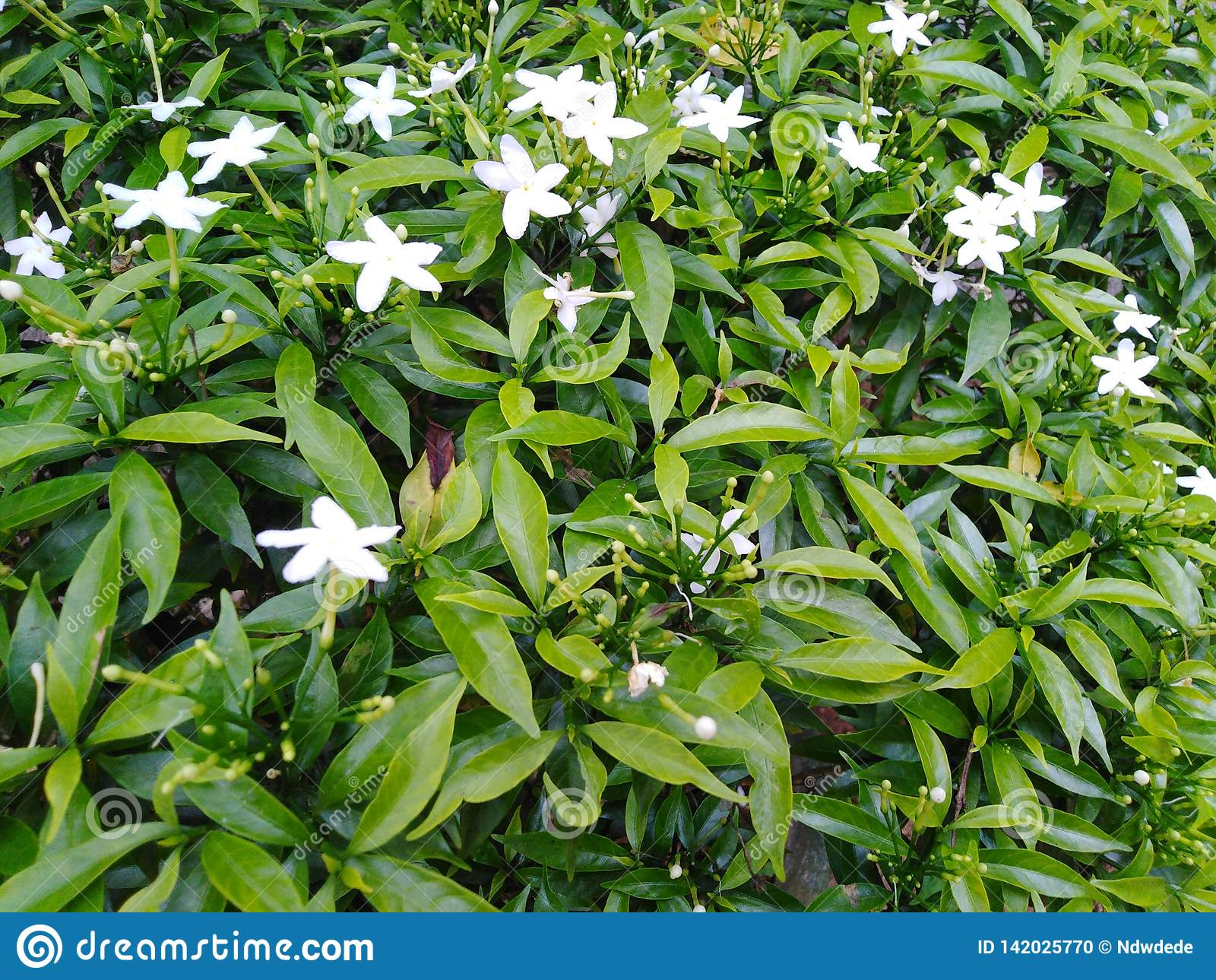 Tiny white garden flowers