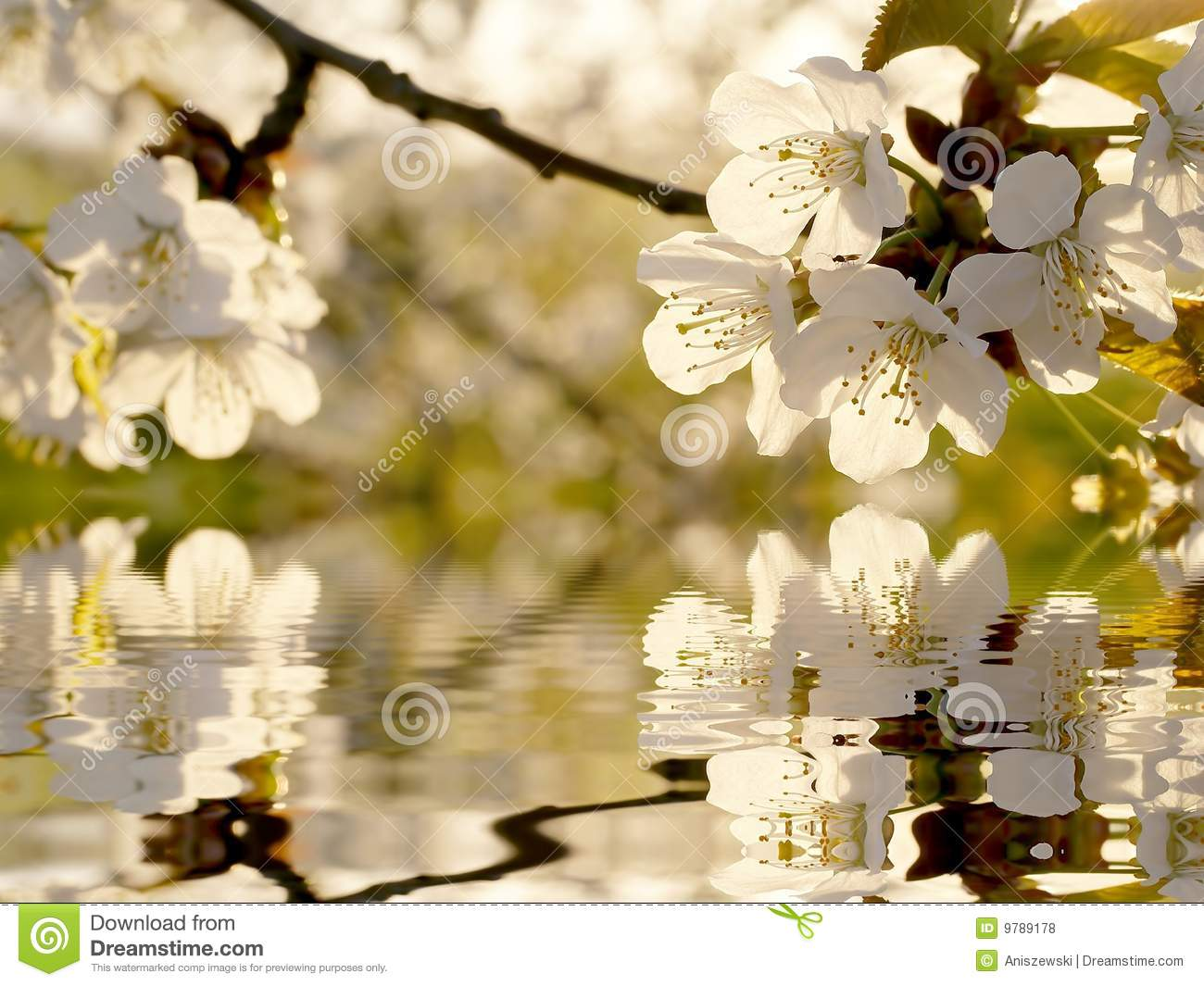 Beautiful White Spring Tree Flowers Stock Photo Image