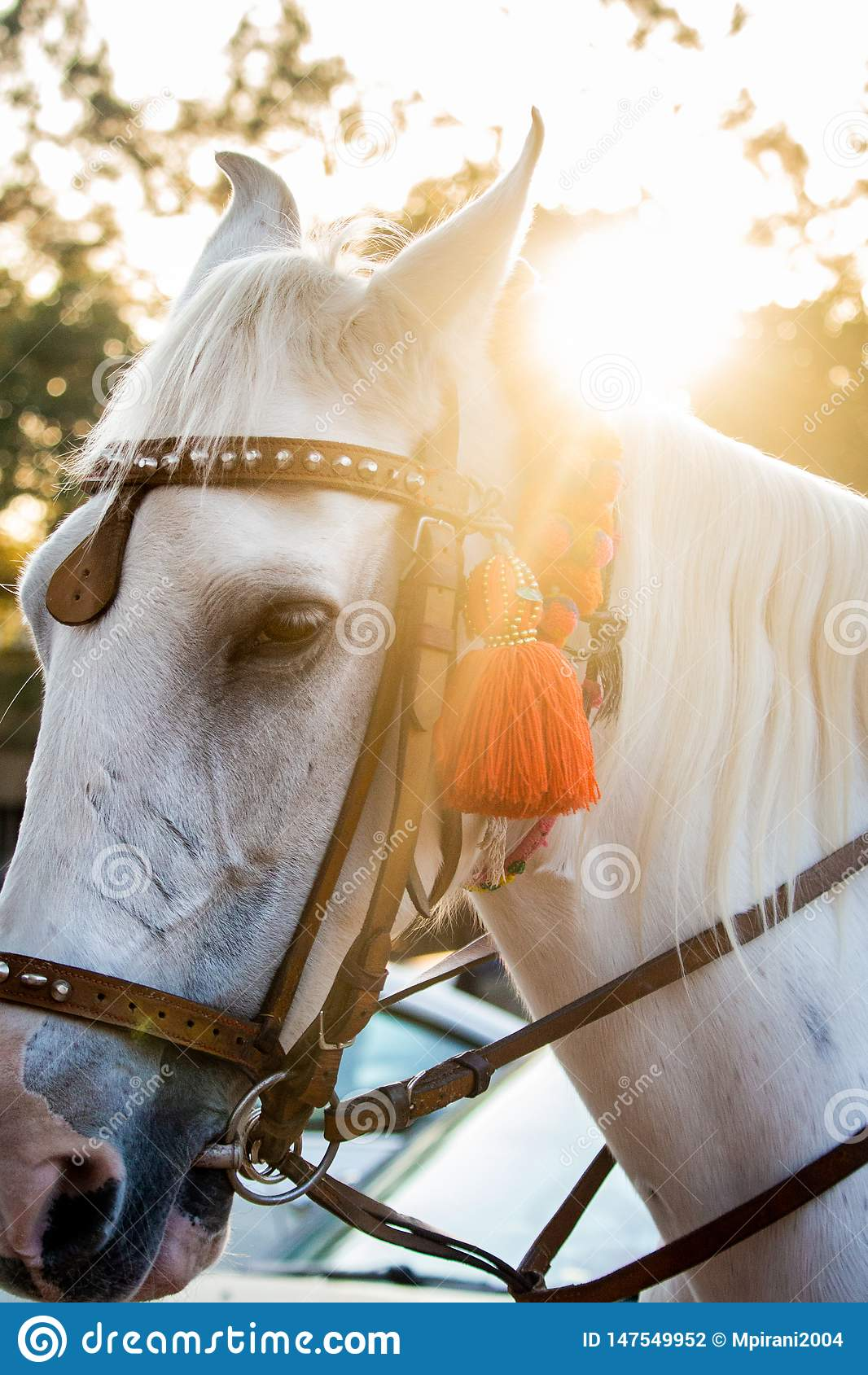 Beautiful white stallion`s face and mane
