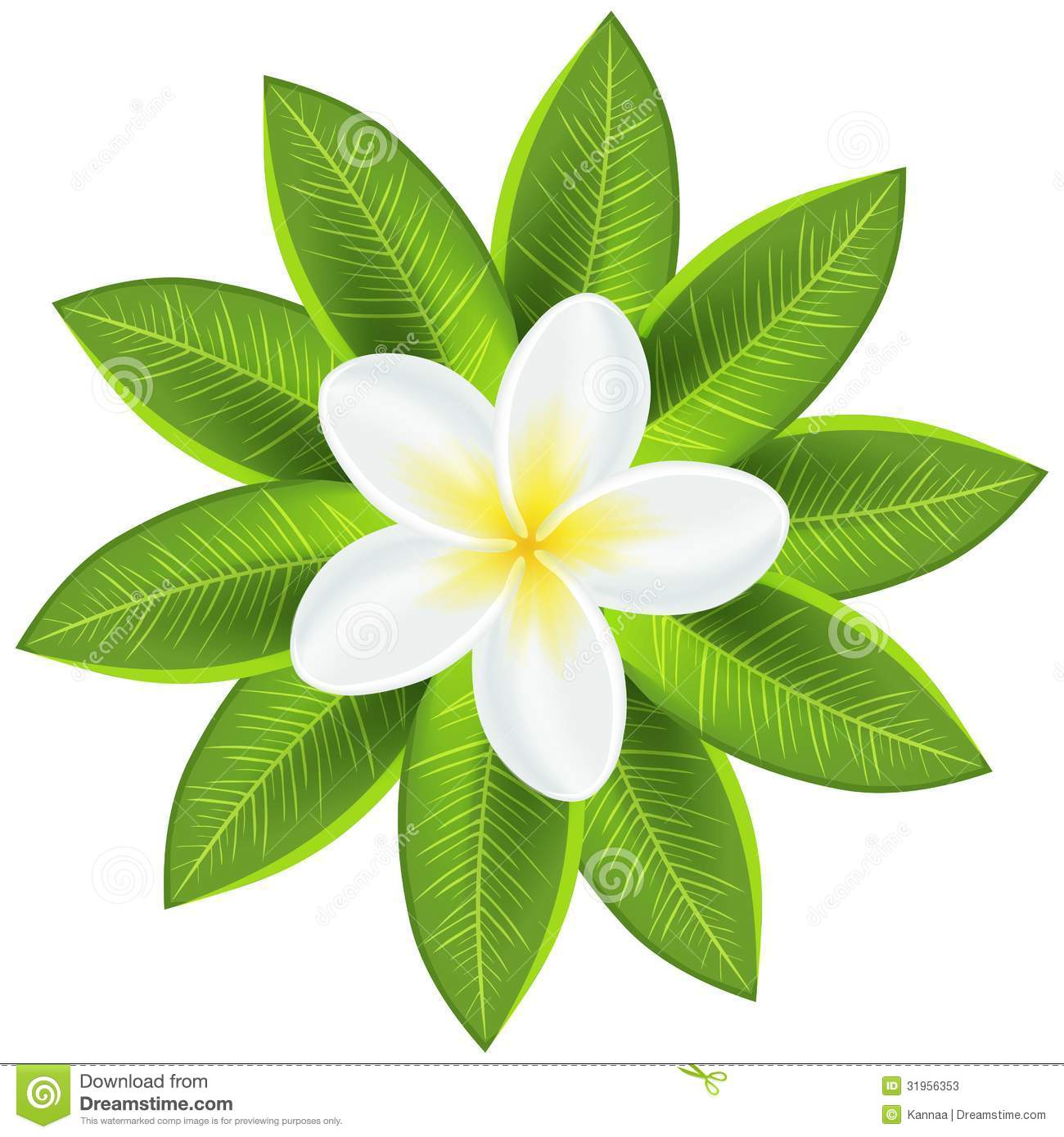 Beautiful white tropical flower. Vector illustration for your fresh ...