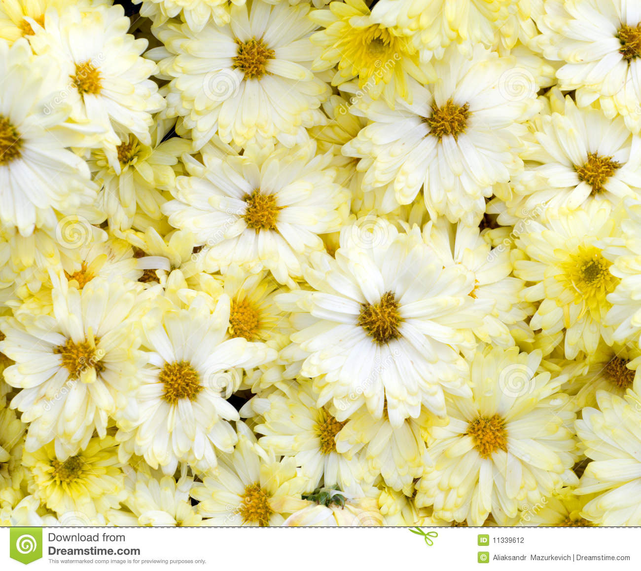 Beautiful white yellow flowers stock photo image of bunch beautiful white yellow flowers mightylinksfo Image collections