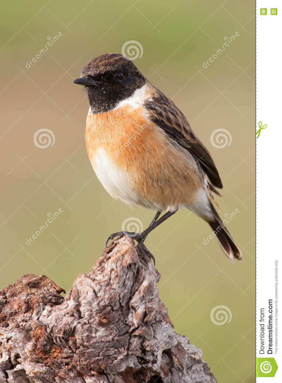 Beautiful Wild Bird Perched On A Branch Stock Image ...