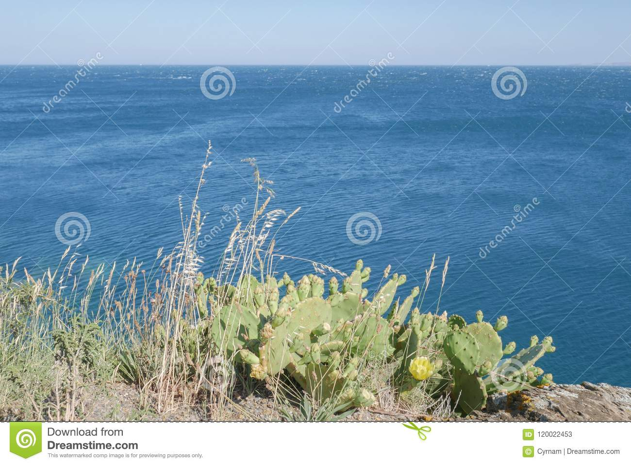Beautiful wild cactus with blue sea background